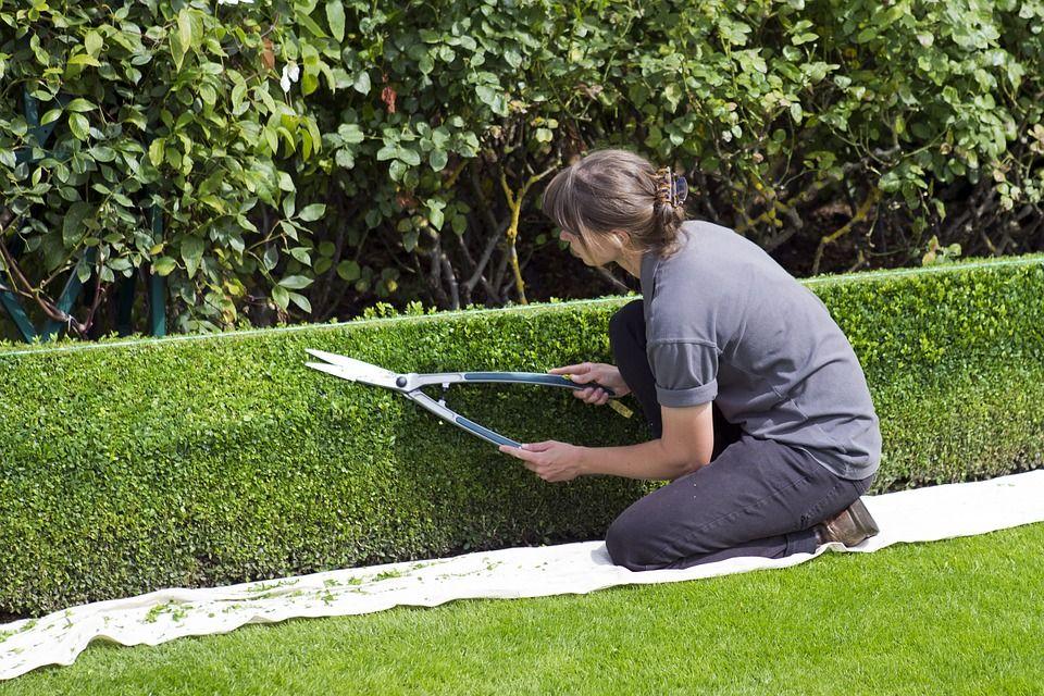 pielegnacja ogrodu koszenie trawy grabienie zywoplot (7)